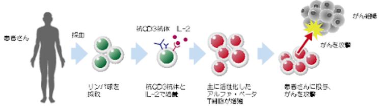 アルファ・ベータT細胞療法の仕組み